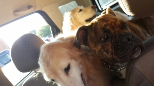 Creative Dog Training Blog Why Wont My Dog Just Lay Down