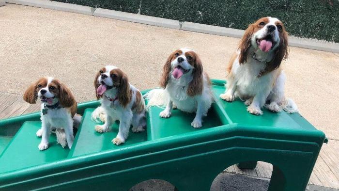 Creative Dog Training On Site Services Training Programs
